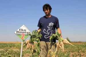 Pored povećanja prinosa EkoBooster 2 povećava i digestiju kod šećerne repe